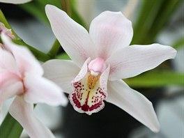 Návštěvníky do skleníků vábí exotická flóra, například orchideje. (27. prosince...