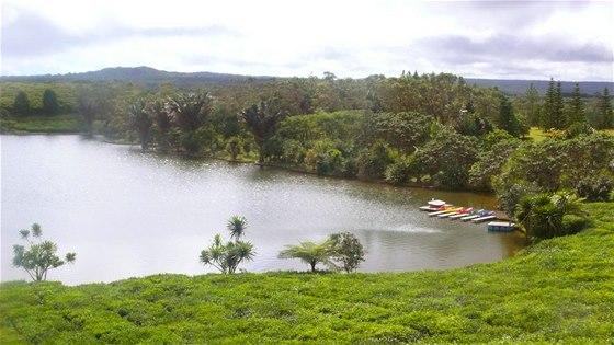 Pohled na čajovou plantáž v restauraci u výrobny čaje Le Boi Chéri