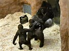 Kamba s mláďaty