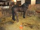 Ve Špindlerově Mlýně řádil v pondělí odpoledne pár koní, který se splašil při