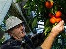 Josef Boukal z Hradce Králové je uznávaným pěstitelem citrusů i jablek.