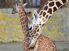 Matka s potomkem