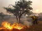Chilští hasiči se snaží uhasit lesní požár u města Melipilla vzdáleného asi 70...