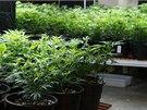 Specializované obchody se na středeční zahájení prodeje marihuany důkladně