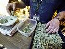 Zaměstnanci obchodů, které dostaly licenci na prodej marihuany, dokončují...