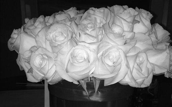 Hayden Panettiere dala na Twitter snímek růží, které jí poslal Tom Ford.