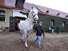 Ošetřovatelé evakuovali přibližně 220 koní.