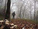 Hledač lanýžů Ezio Costa (66) pátrá po lanýžích se svým psem Jolly v lese v...