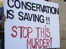 Milovníci zvířat proti aukci práva na lov nosorožce protestovali. (12. ledna