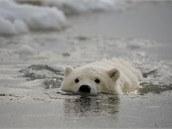 Plavání v zimní vodě přenechejte pro začátek ledním medvědům a otužilcům, kteří už k tomu tréninkem dospěli.