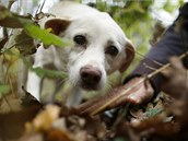 Hledači lanýžů jsou se svými vycvičenými psy úžasně sehraní.