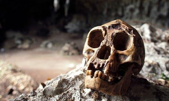 """Odlitek lebky """"hobita"""" z ostrova Flores v jeskyni Liang Bua, kde byl originál nalezen. Mezi antropology tehdy vzbudila vášnivou diskusi, zda jde o pozůstatky jedince s nějakou vývojovou vadou nebo nový druh. Zatím převažují spíše důkazy ve prospěch teorie, že šlo o příslušníka druhu jinak neznámého menšího příslušníka rodu Homo."""