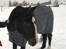 Z útulku pro koně Bianka v Žirči zloděj odnesl i tuto deku.