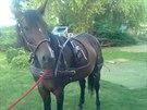 Z útulku pro koně Bianka v Žirči zloděj odnesl i tento ručně zdobený postroj.