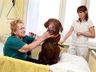 Pes Casper může i za pacienty do postele. V pozadí lékařka Ema Kaslová.