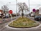 Na třicet jasanů a lip padlo v ulici Na Drahách v Hradci Králové.