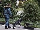 Úřady v Soči řeší, jak z ulic odklidit stovky toulavých psů (1. února 2014)
