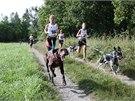 Canicross je založen na naprosté souhře mezi psem a běžcem.