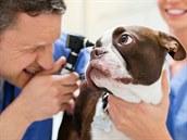 Vyšetření u veterináře