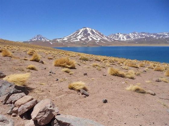 Vysokohorské pleso Miscanti (4220 m n. m.) pod stejnojmenným vulkánem (5622 m...