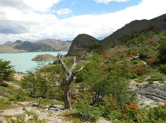 Národní park Torres del Paine. Foceno při okruhu W kolem jezera Nordenskjöld.