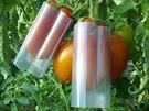 Rajčata s nasazeným plastovým obalem.