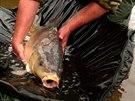 Ochranné pomůcky jsou prospěšné pro správnou manipulaci s rybami.