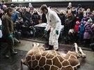 Zoo v Kodani nechala utratit mládě žirafy, vedení zahrady rozhodlo, že...