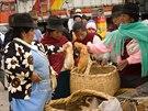 Ženy kupují na trhu v ekvádroském městečku Saquisili peruánská morčata do...