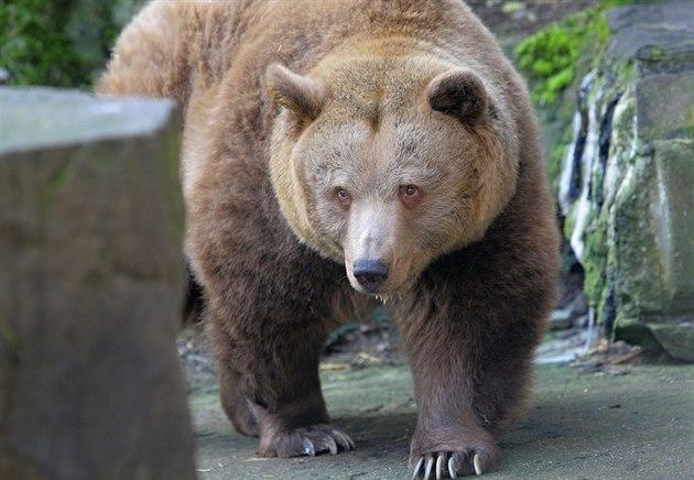 Turisté mohou v p�íkopu krumlovského zámku obdivovat t�i medv�dy, kte�í se...