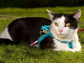 Kočky patří ke stejně frekventovaným mazlíčkům jako psi.