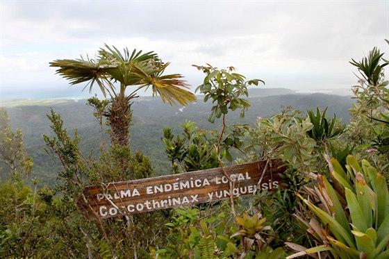 Milovníci botaniky zde najdou celou řadu endemických druhů.