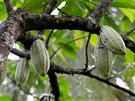 Cesta na El Yunque vede tropickým pralesem, ve kterém se skrývá spousta...