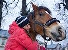 Vrchlabí darovalo zlaté olympioničce Evě Samkové koně Pepina, o kterého se...