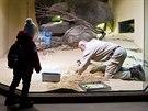 Terárium, ve kterém mají návštěvníci devět druhů ještěrů doslova jako na dlani,...