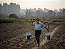 Smog ohrožuje čínské zemědělství. Rostliny nemají dostatek světla.