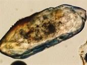 Snímek zirkonu pod optickým mikroskopem