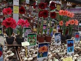 Nizozemsko je známé jako země tulipánů, ale jeden z bonmotů říká, že Holanďané