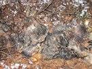 Na Berounsku se za poslední rok našlo pět psích těl bez hlavy
