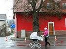 Letitá moruše rostoucí ve Vikýřovicích na Šumpersku, jejíž stáří je odhadováno...
