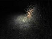 Světlo Peli je užší, na běhání je ho ale dostatek.