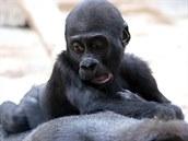 Nuru dobře ví, že Kamba je ten nejspolehlivější ´autobus´.