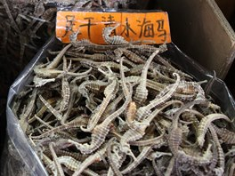 Čínské lékárny jsou plné nejrůznějších sušených rostlin i živočichů.