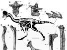 Kosti nového dinosaura vykopané v oblasti Hell Creek