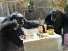 Oslava narozenin šimpanzů v Zoo Dvůr Králové nad Labem (22. 3. 2014)