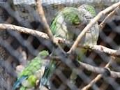 Line�rka umo��ovala od 30. let pozpvat papou�ky za pletivem. V nov� vybudovan�m...