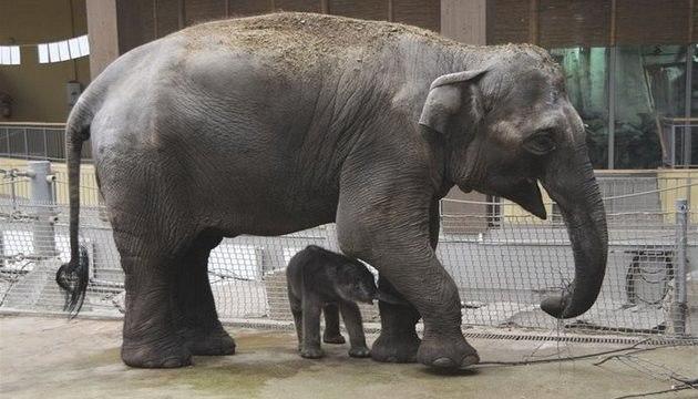 Zoo Ostrava vám nabízí přírodu na dosah ruky