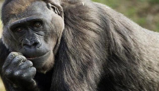 Pražská zoo patří k sedmi nejlepším na celém světě