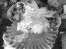 Snímek z elektronového mikroskopu zobrazuje prachové částice sebrané 19. února...