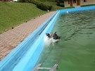 K divok�mu praseti, kter� z�pasilo s vodou v l�ze�sk�m baz�nu, zavolali host�...